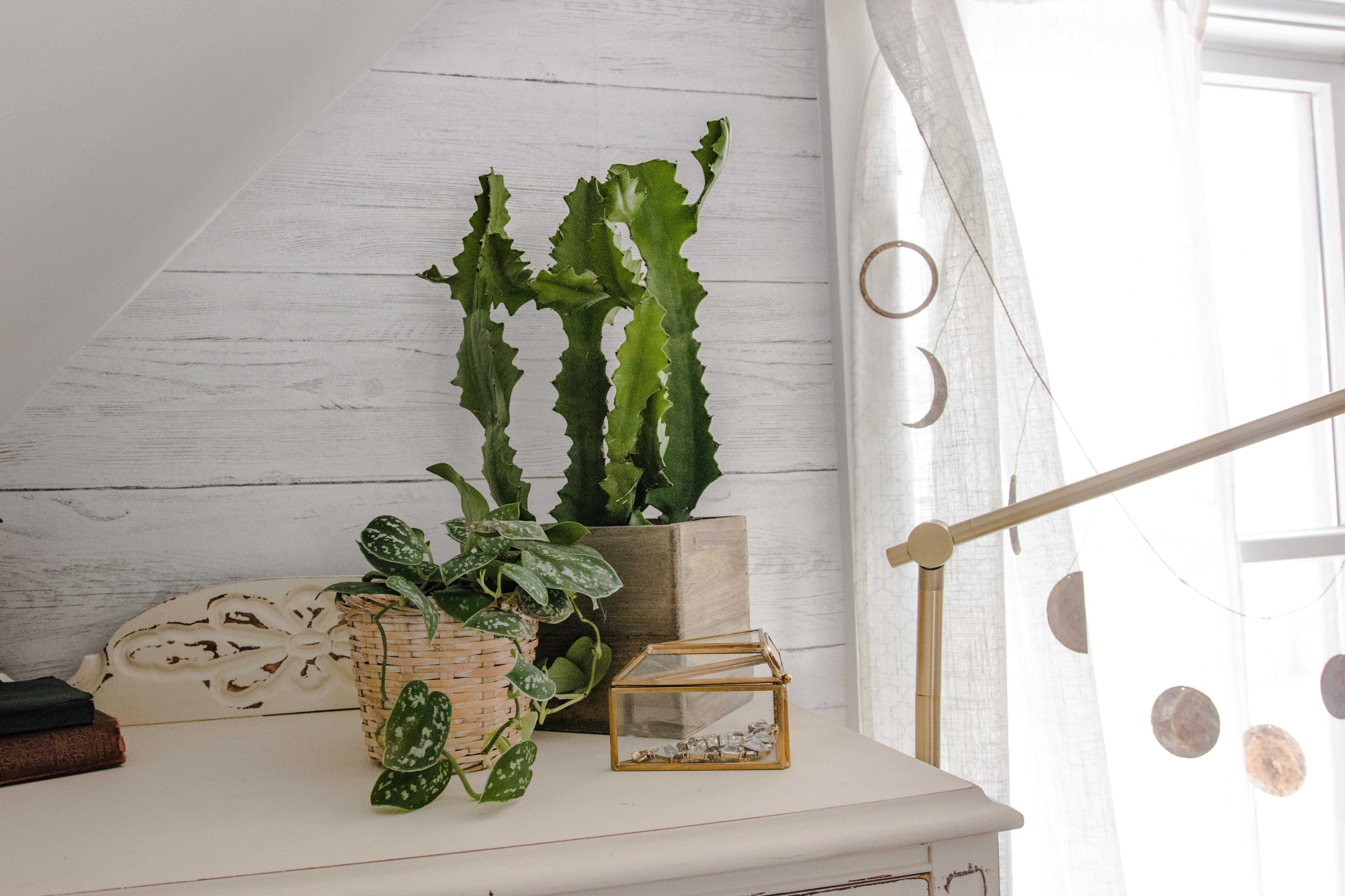 cactus and ivy on a white dresser